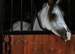 white horse in black cage