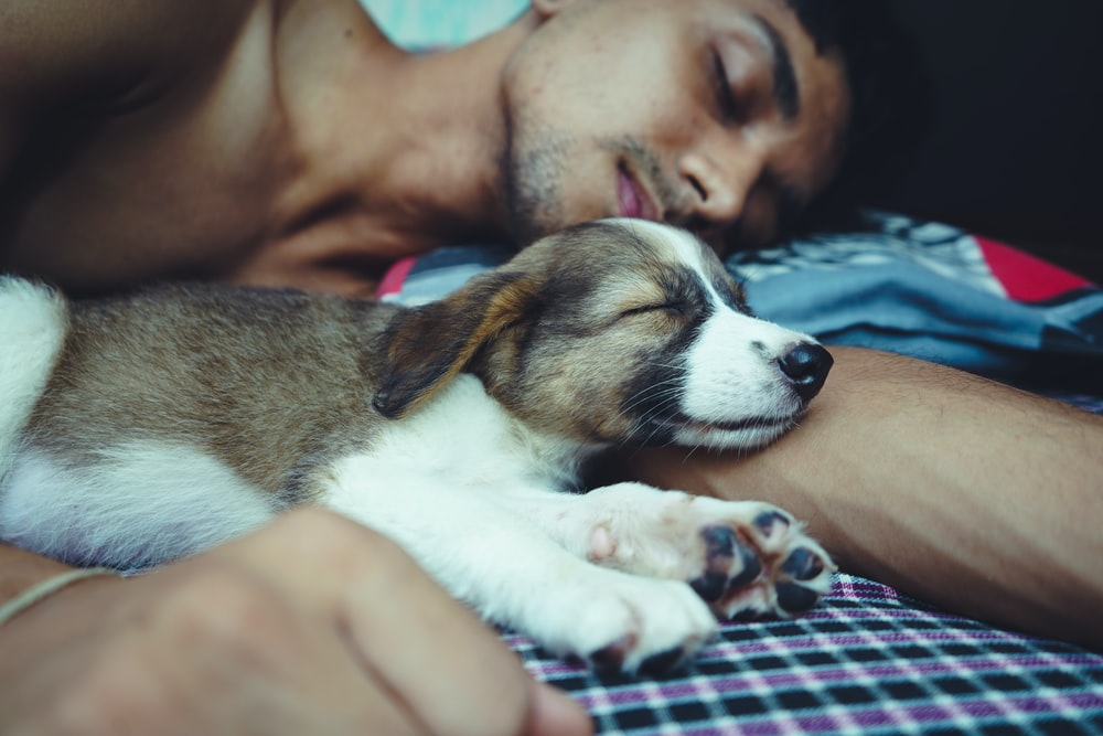topless man lying on bed beside brown and white short coated dog