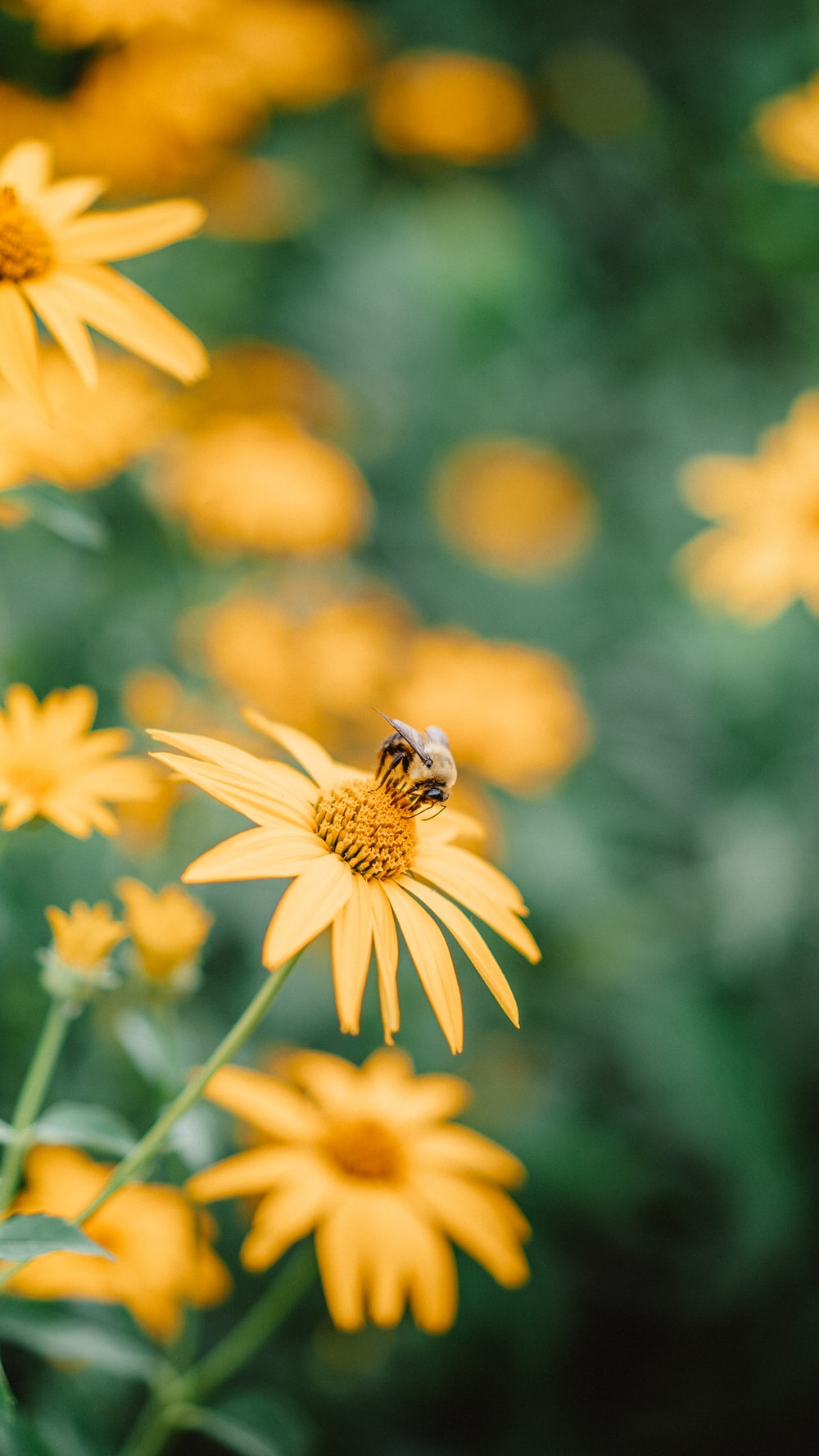 bee on yellow flower in tilt shift lens