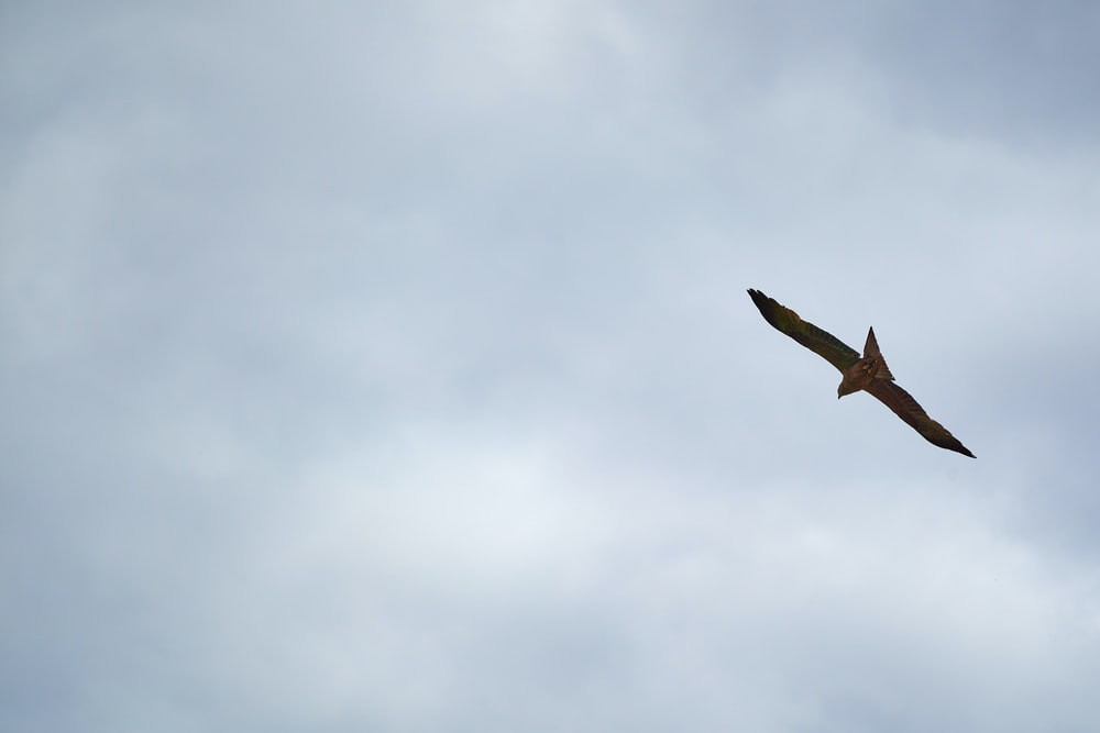 brown bird flying under white clouds during daytime
