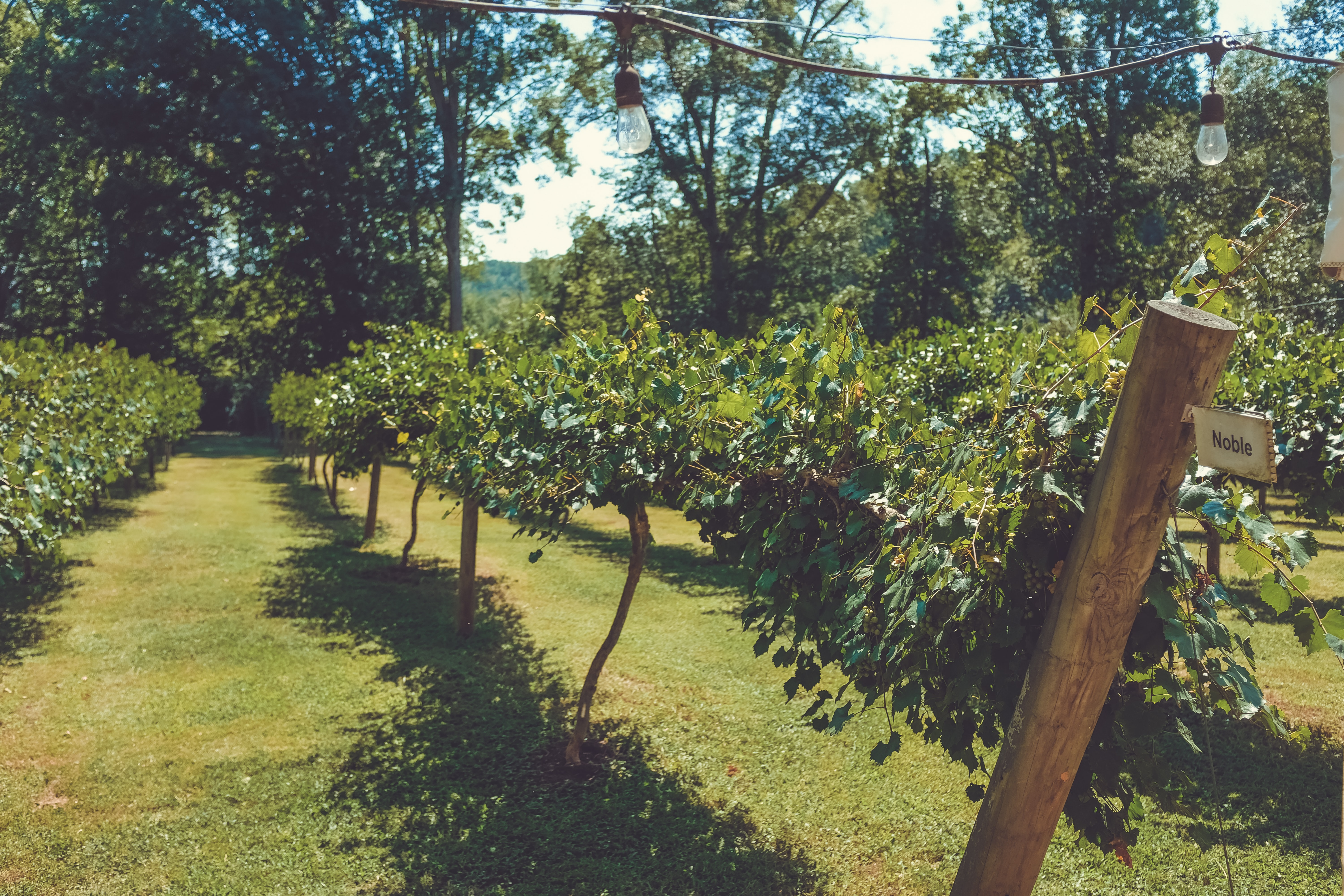 Agritourism Helps Small Farmers and Businesses
