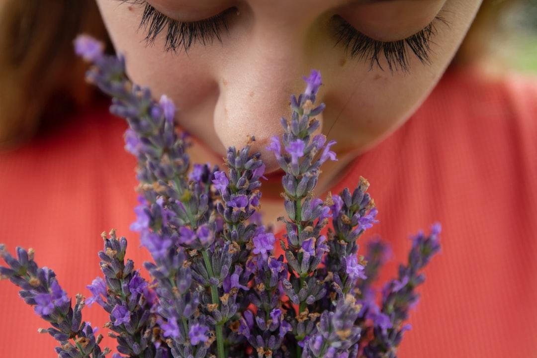 Smelling Fresh Lavender Blooms