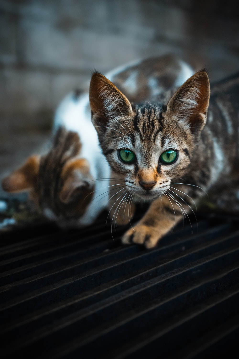 brown tabby cat on black wooden table
