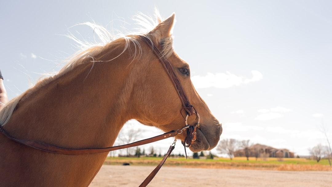horse photo in williston north dakota