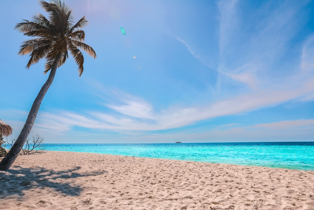 palm tree on beach during daytime