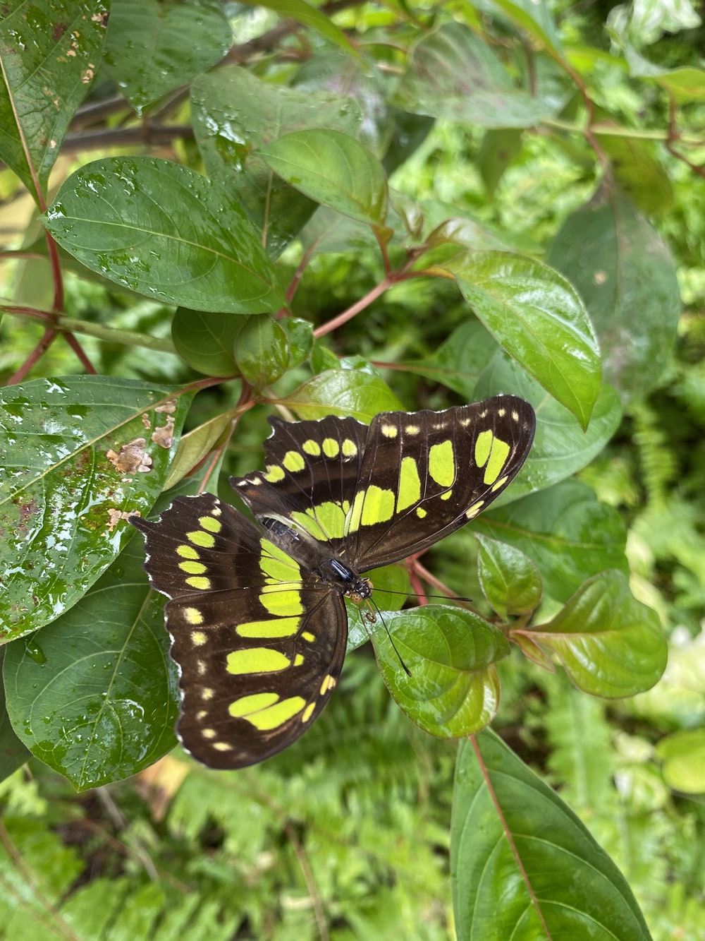 black and yellow butterfly on green leaf during daytime