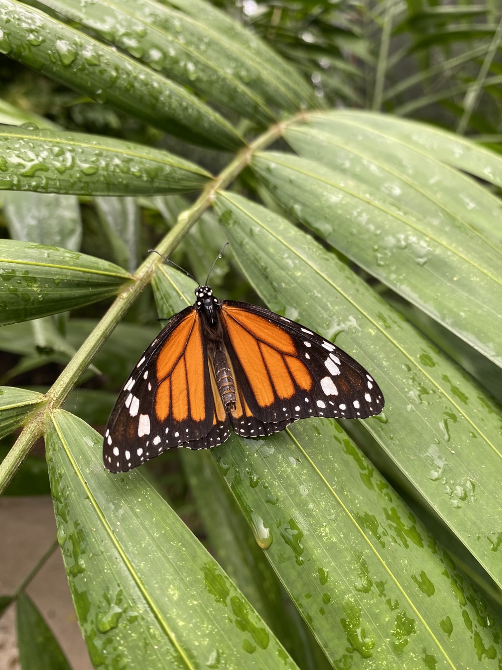monarch butterfly perched on green leaf