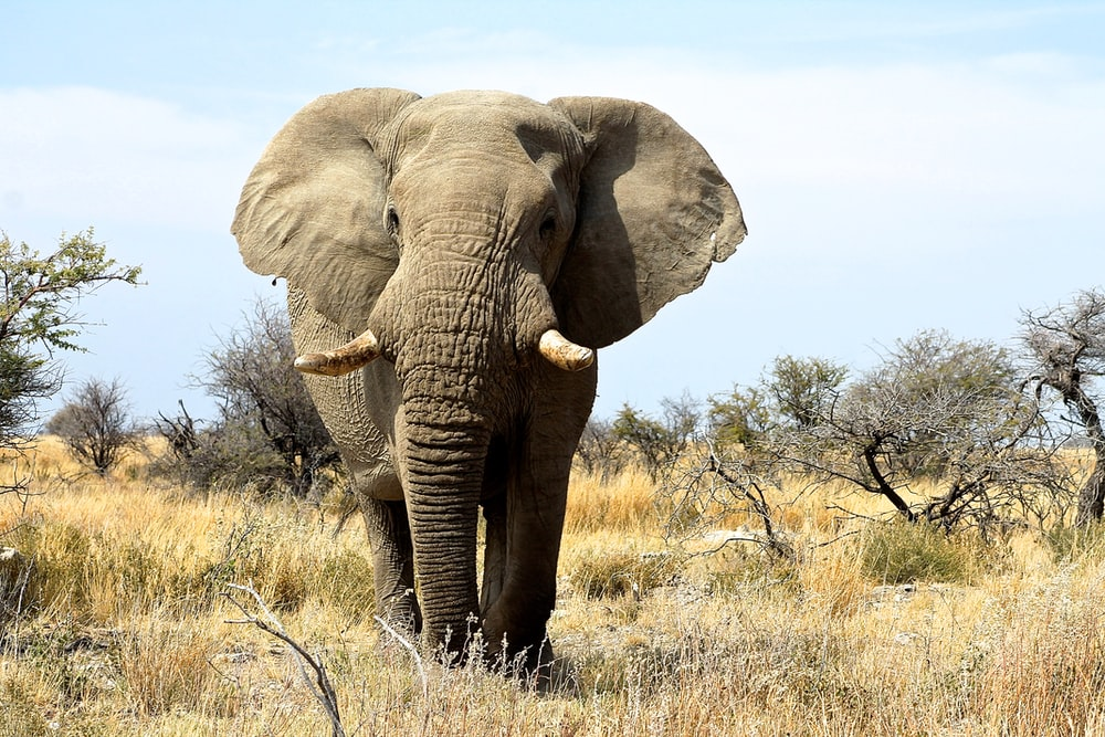 elephant on green grass field during daytime