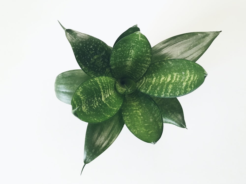 green and white plant on white background