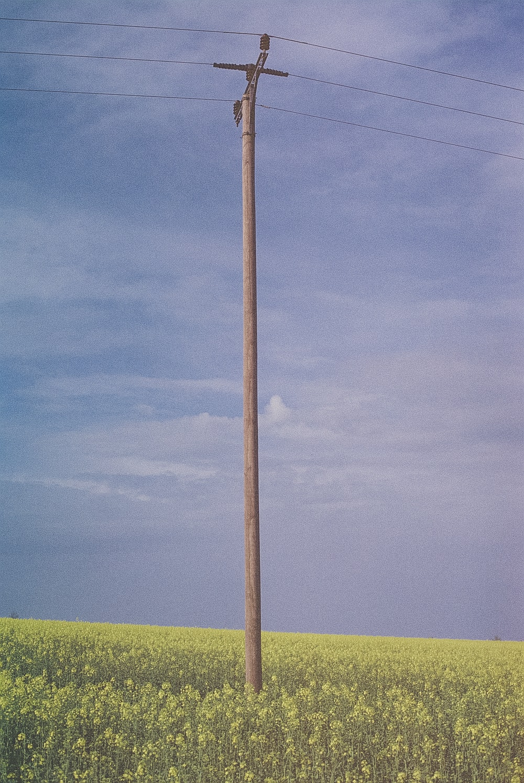 brown wooden stick on green grass field under blue sky during daytime