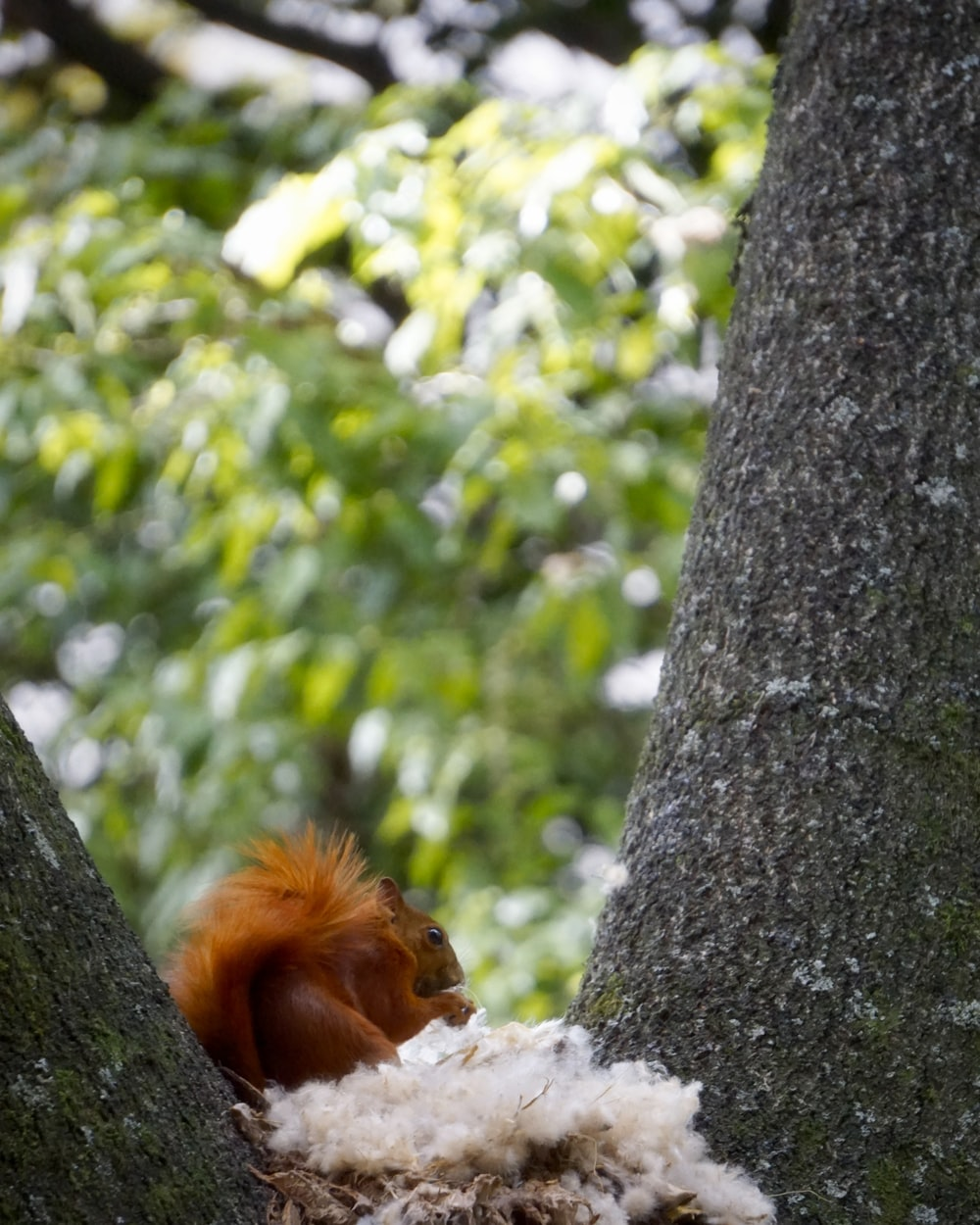 brown and white squirrel on tree trunk during daytime