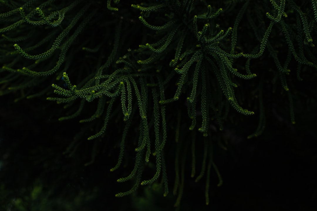Green Plant In Close Up Photography - unsplash