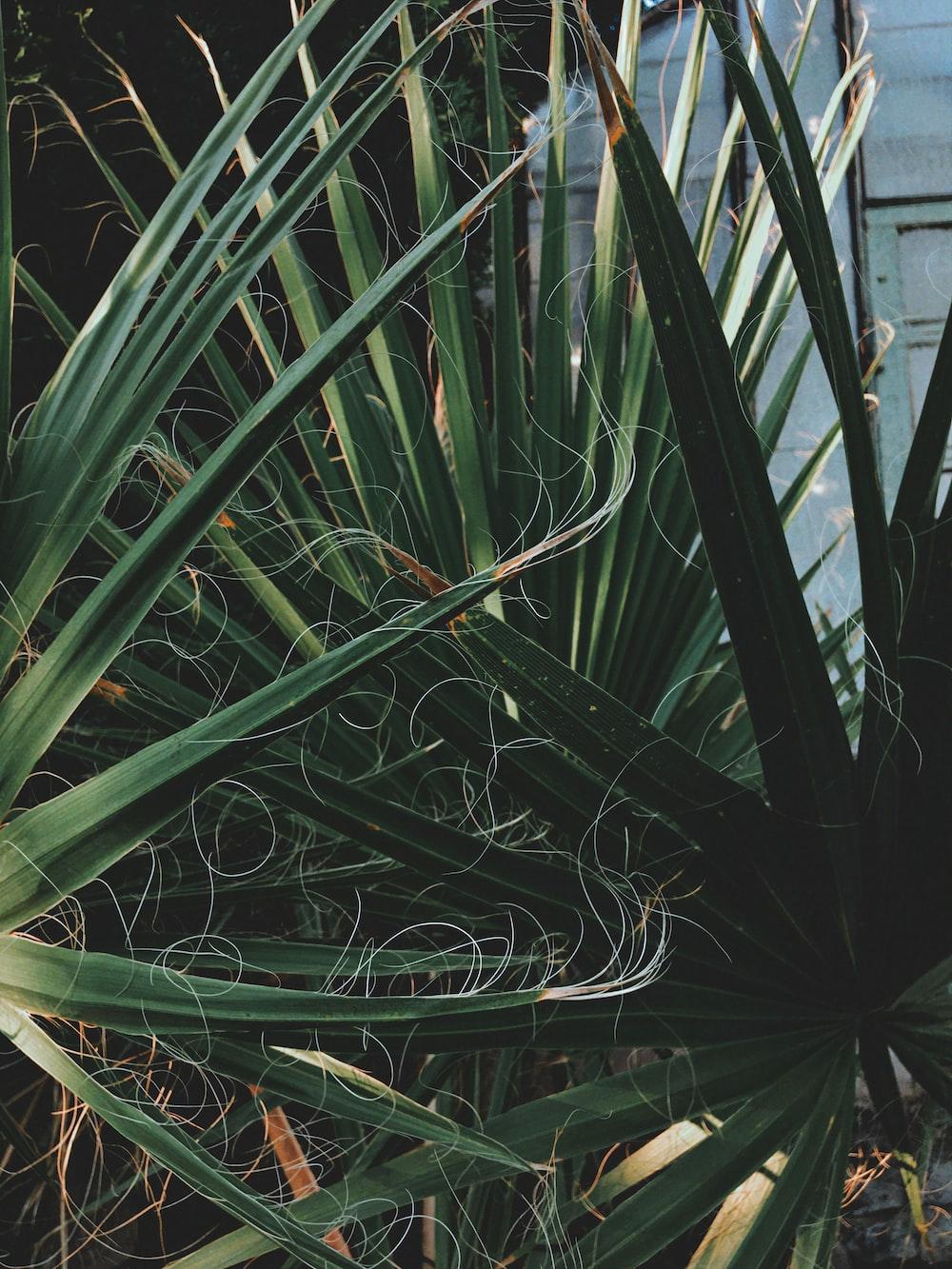 green plant near white metal fence