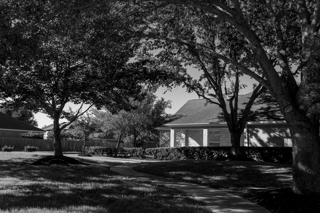 Black and white photo of a pathway with oak trees in a neighborhood
