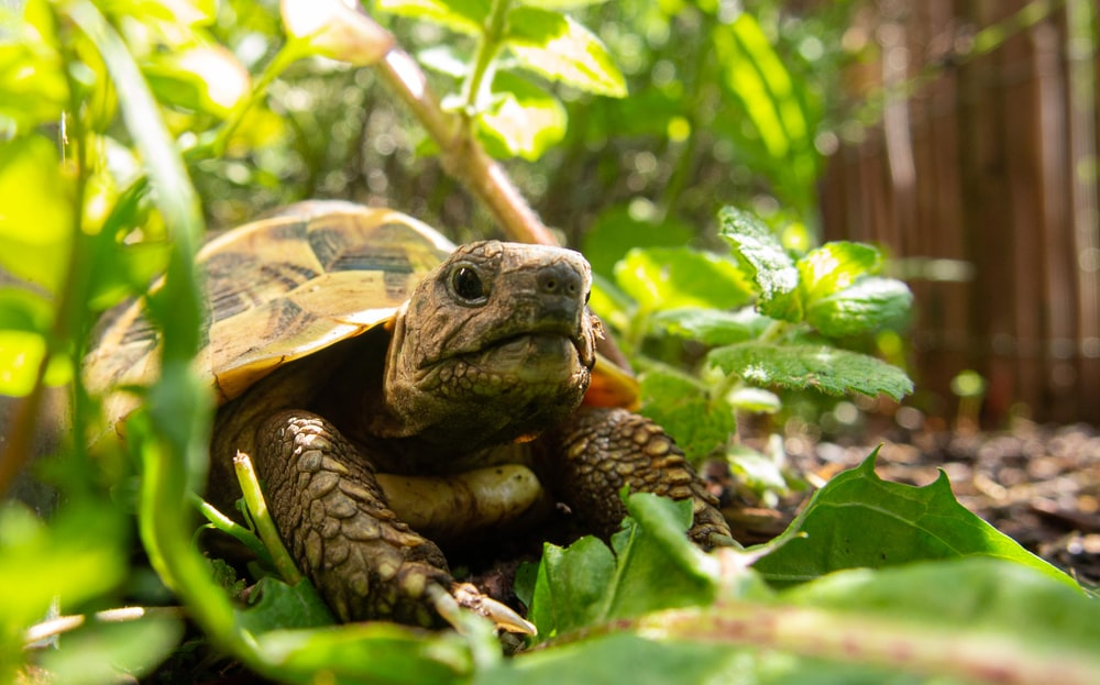 brown and black turtle on green leaves