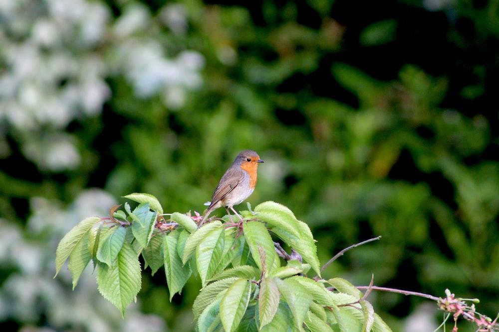 brown and orange bird on green leaf plant during daytime