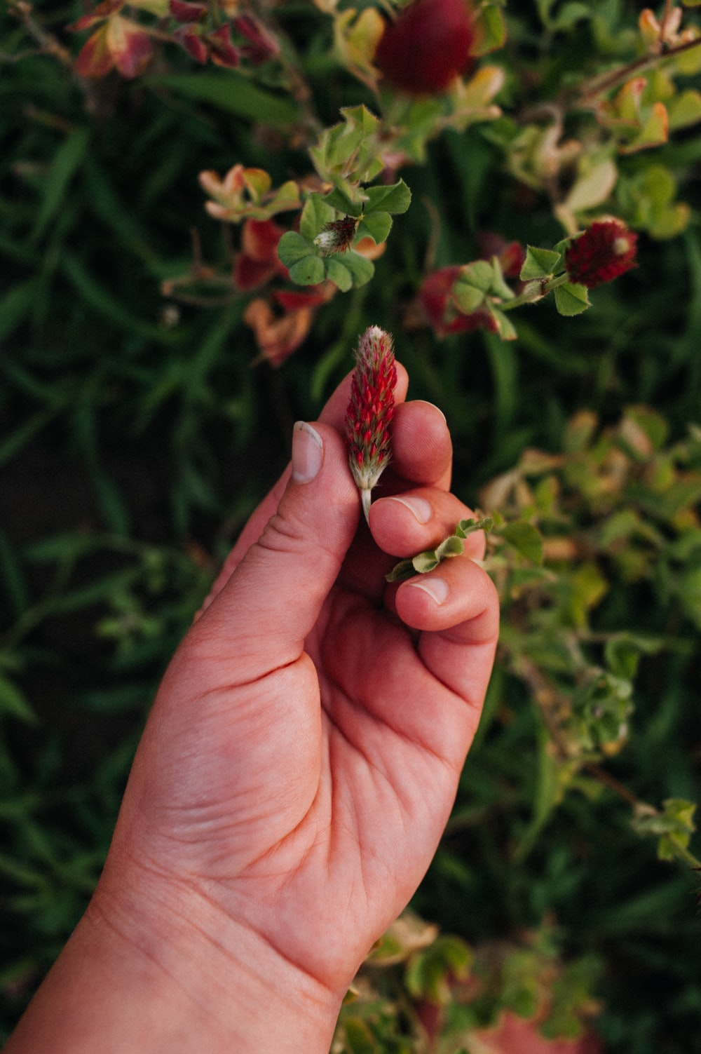 red and white flower on persons hand