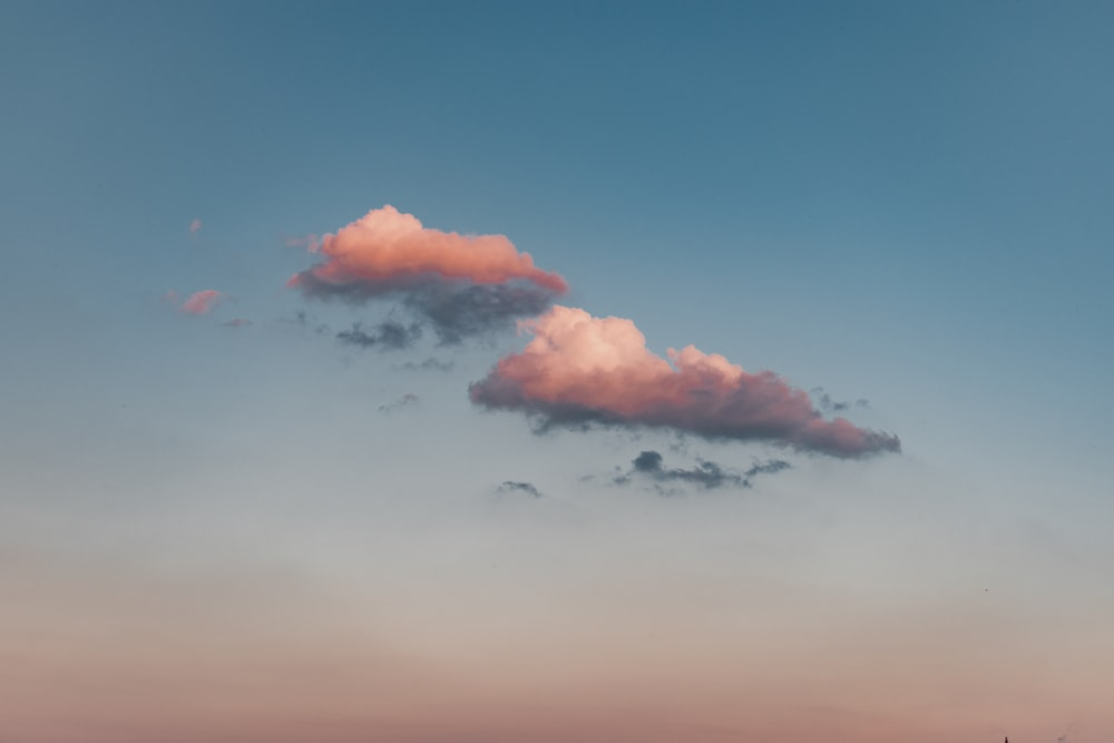 birds flying under blue sky during daytime