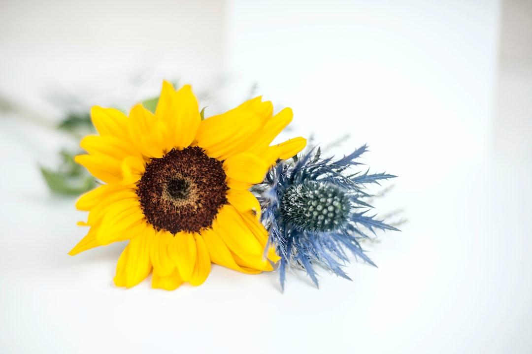Sunflower & Thistle - unsplash