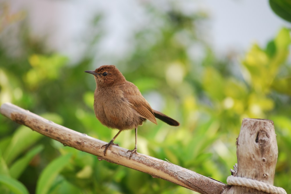 brown bird on brown tree branch during daytime