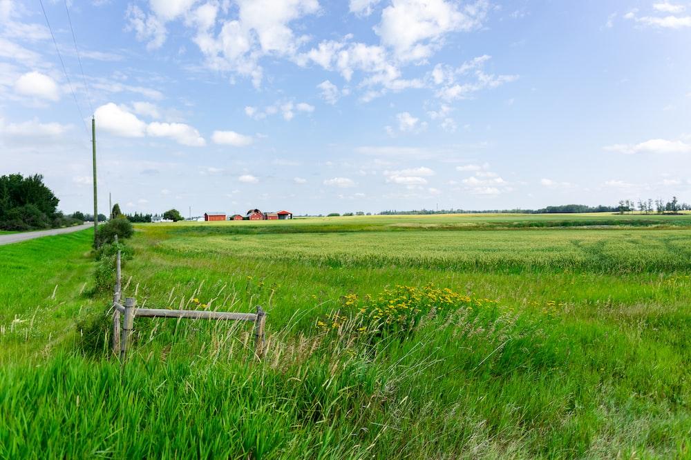green grass field under blue sky during daytime