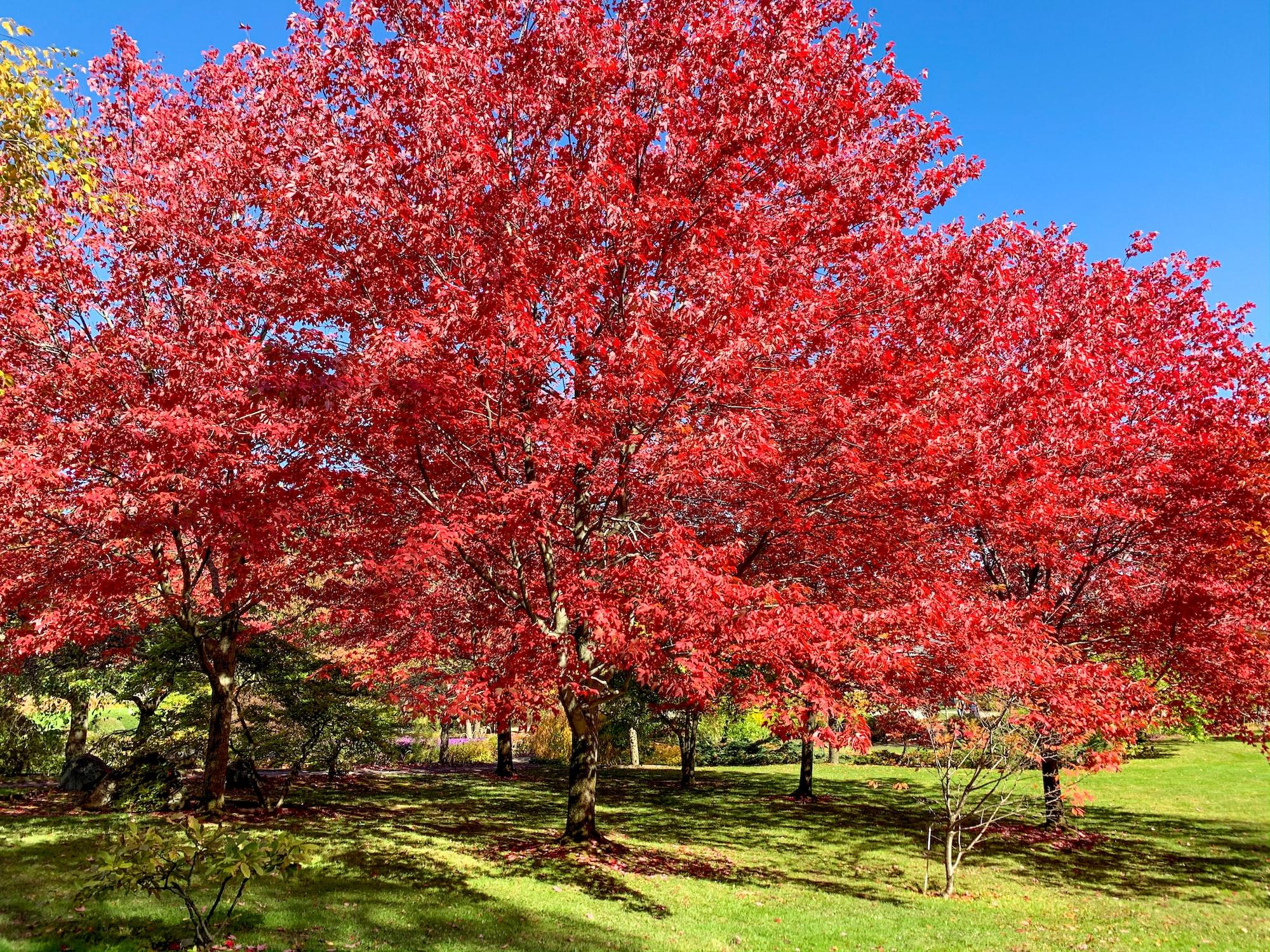 Montreal Botanical Garden Fall Trees
