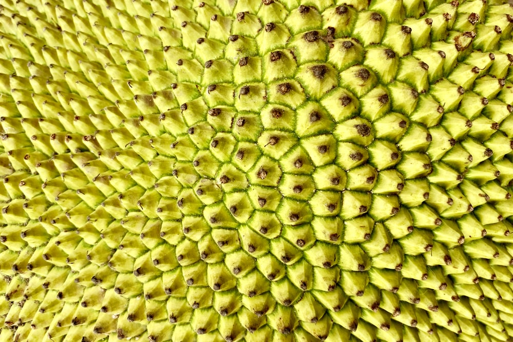 green and yellow fruit close up photo