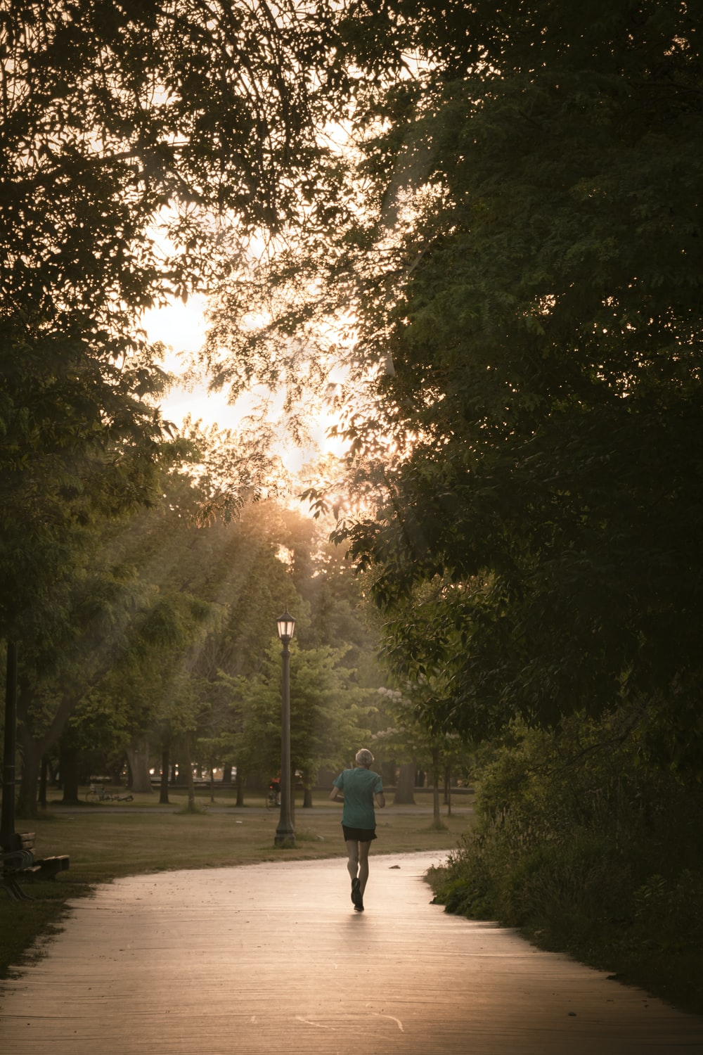 person in blue jacket walking on pathway between trees during daytime