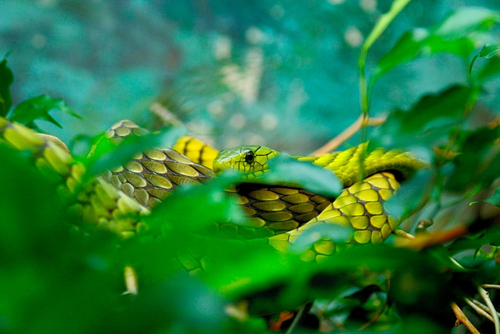 green snake on body of water