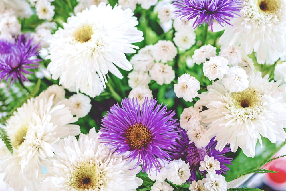 white and purple flowers in tilt shift lens