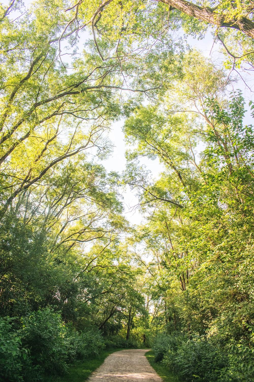 green trees under white sky during daytime