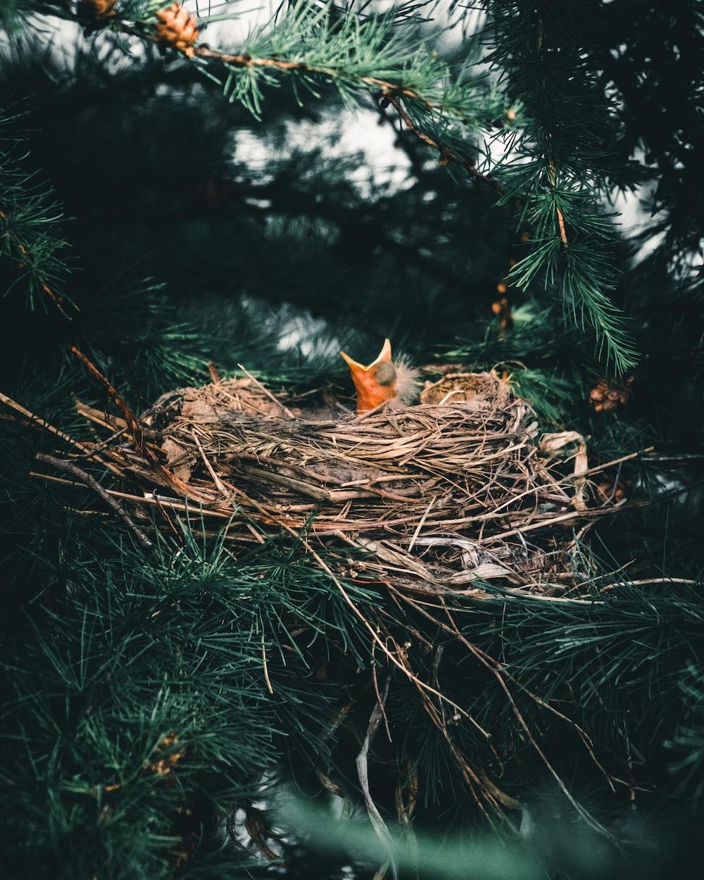 orange tabby cat on brown nest