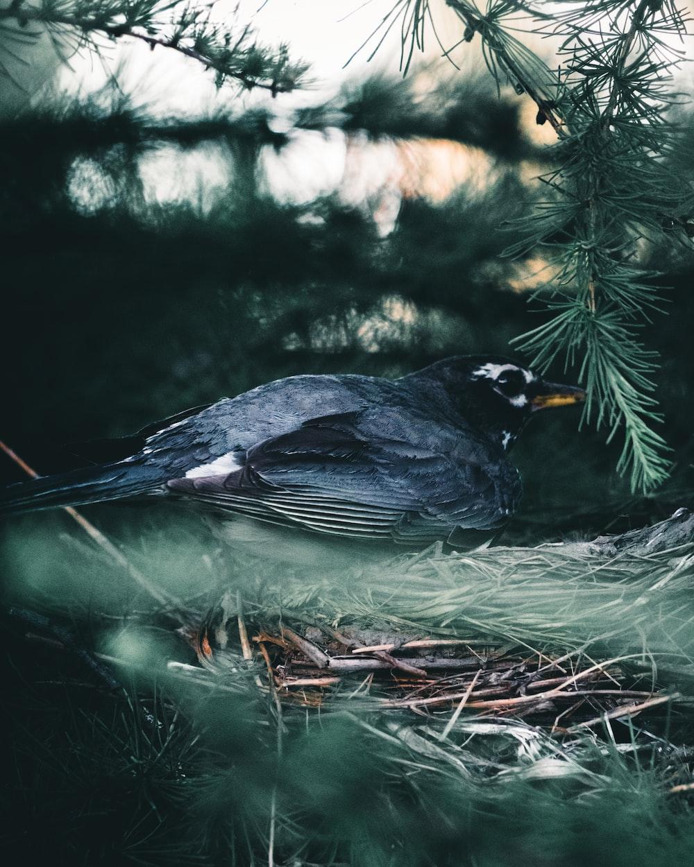 black and yellow bird on tree branch