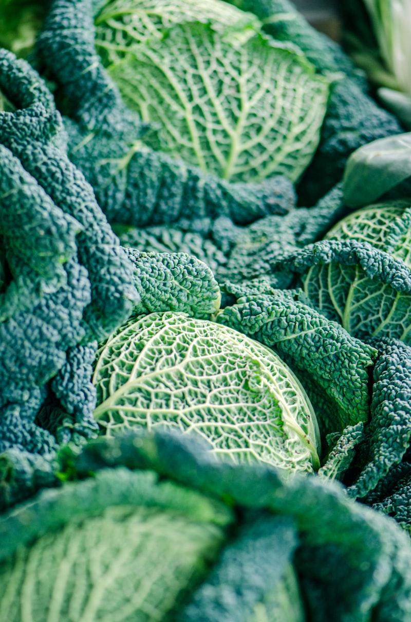 6 vegetais para plantar na sua horta!