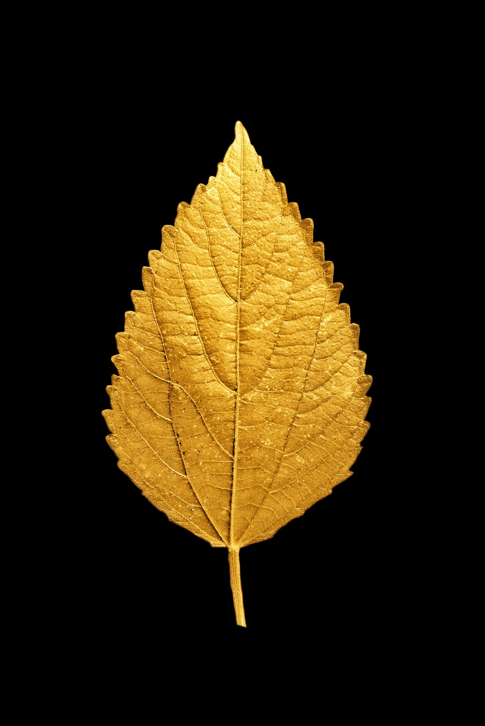 yellow and brown leaf illustration