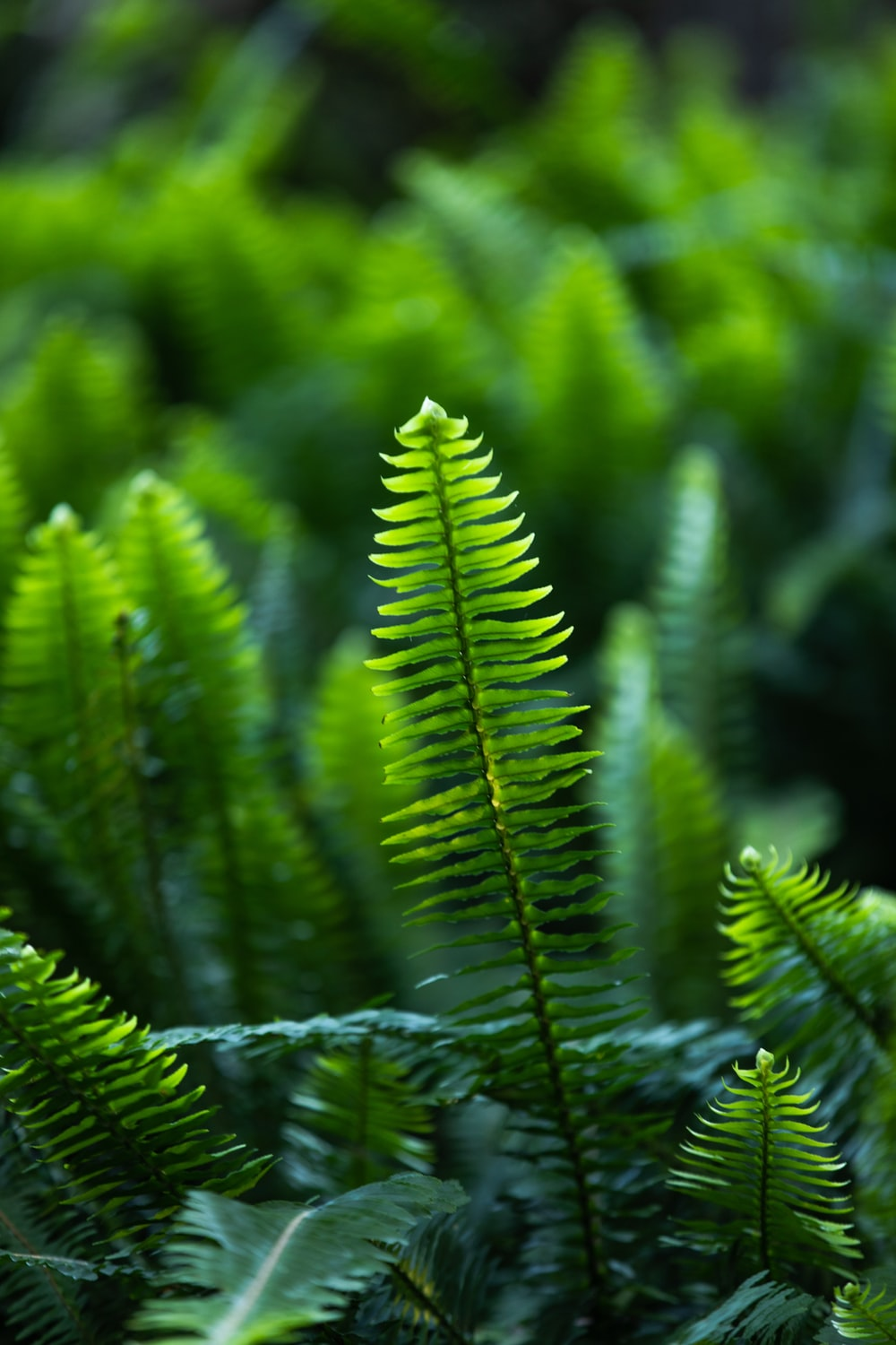 green fern plant in close up photography