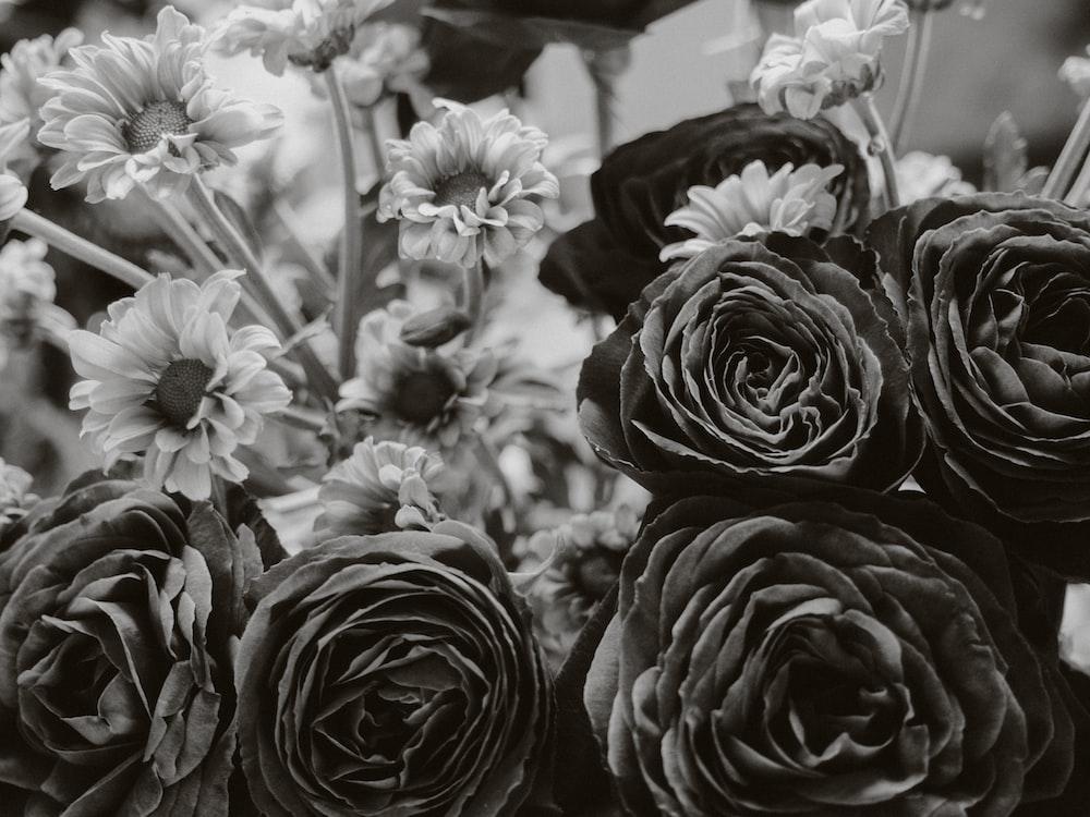 greyscale photo of flowers in bloom