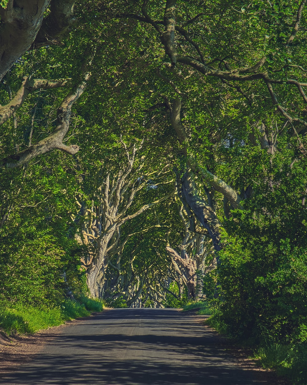 green trees beside gray concrete road during daytime