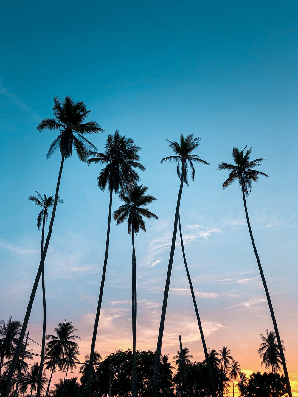 coconut palm trees under blue sky during daytime