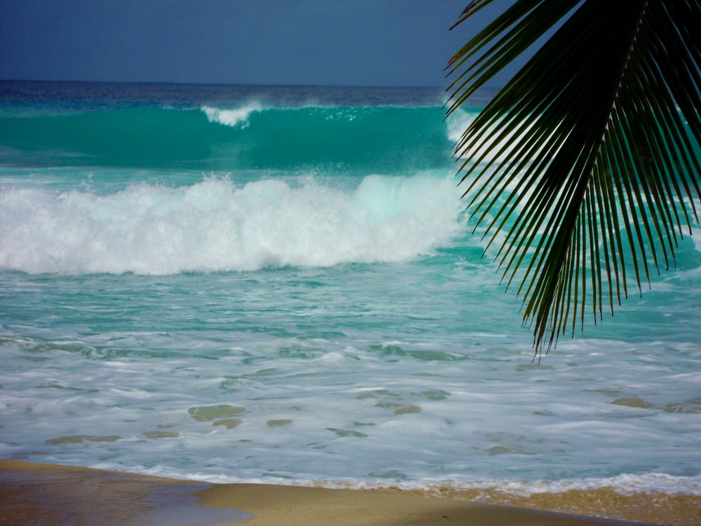 green palm tree near sea waves during daytime