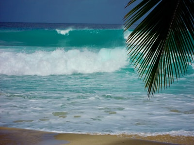 green palm tree near sea waves during daytime barbados teams background