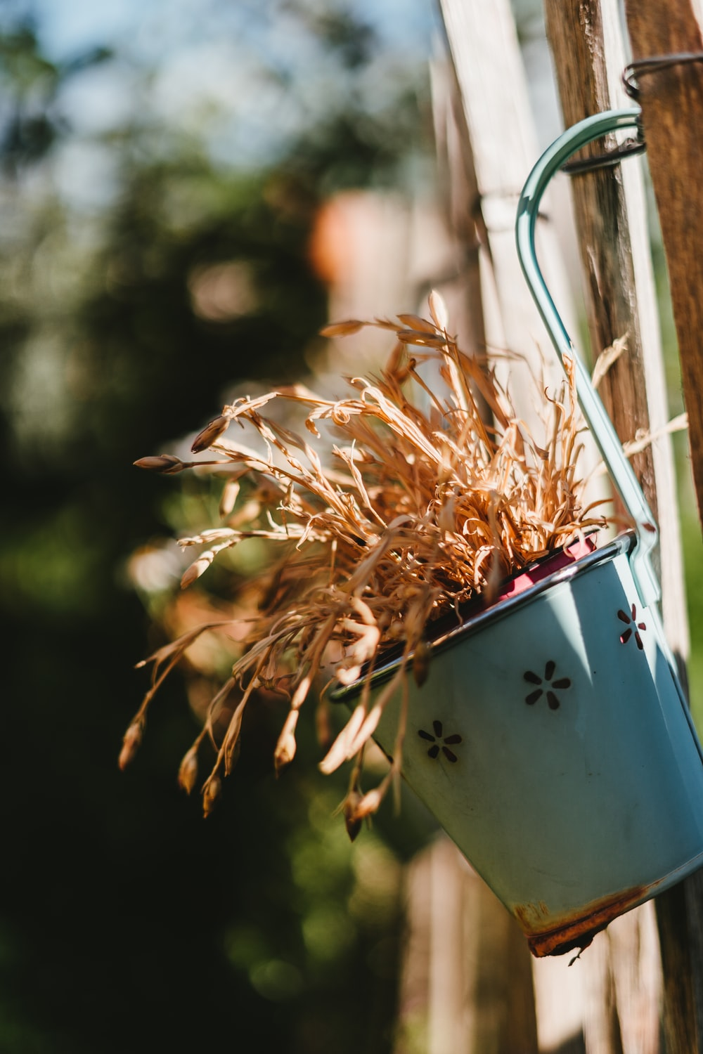 white and blue bucket with brown dried leaves