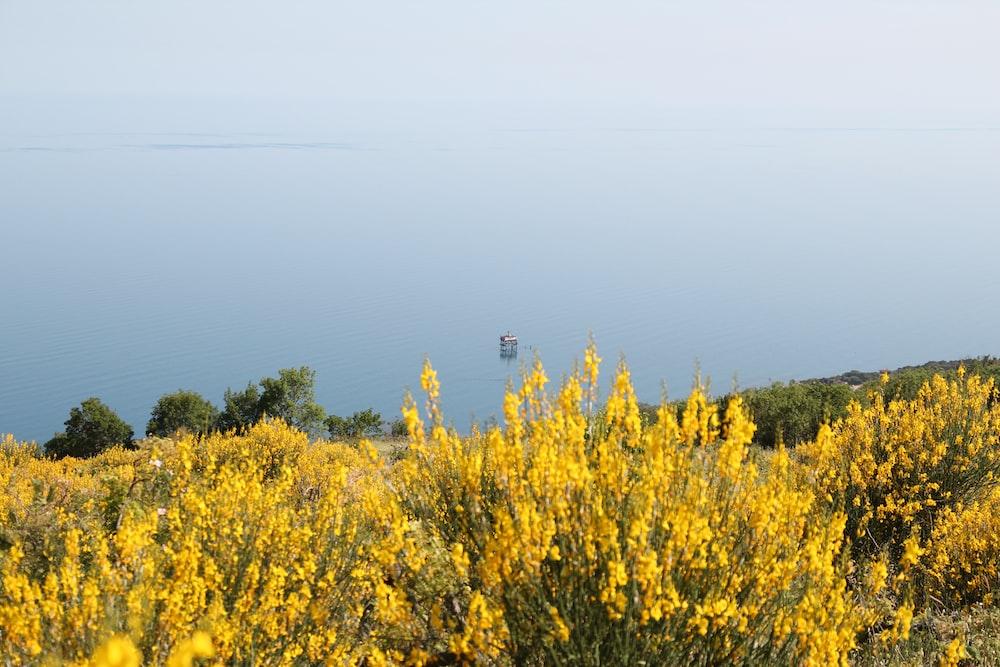 yellow flower field under white sky during daytime