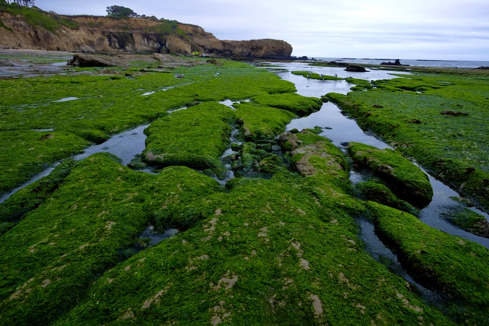 green moss on brown rock formation near body of water during daytime