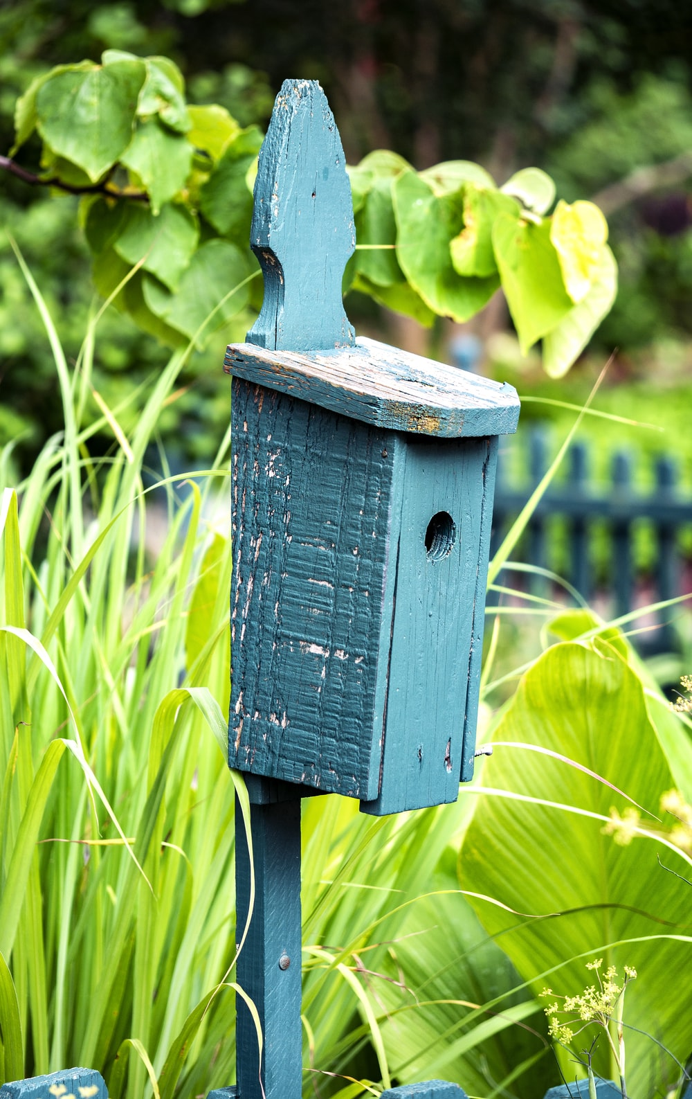 blue wooden birdhouse on green plant during daytime