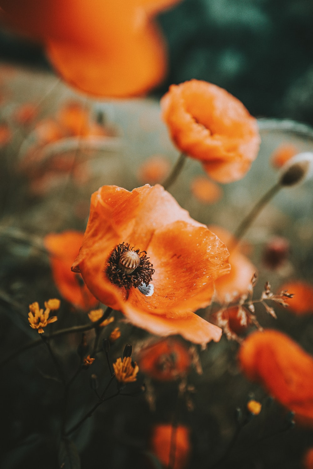 orange flower in tilt shift lens
