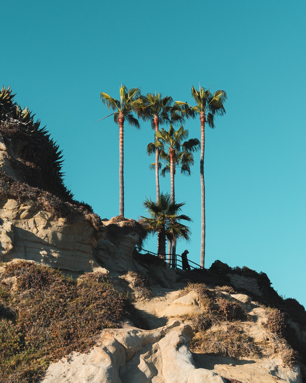palm tree on brown rocky hill under blue sky during daytime