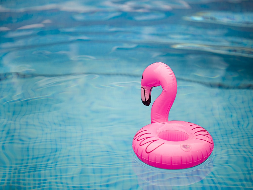 pink inflatable flamingo on water