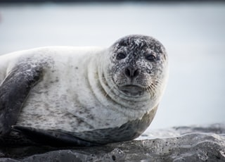 Seal hanging out on an iceberg