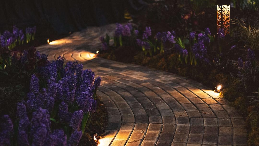 Beautifully lit garden path